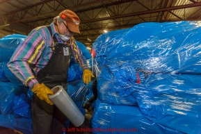 Volunteer Cornelius Eastman shrink wraps a portion of the over 1600 bales of straw at Airland Transport for use by the mushers and dogs at the 20+ checkpoints along the trail. Thursday February 12, 2015 prior to Iditarod 2015.(C) Jeff Schultz/SchultzPhoto.com - ALL RIGHTS RESERVEDDUPLICATION PROHIBITED WITHOUT PERMISSION