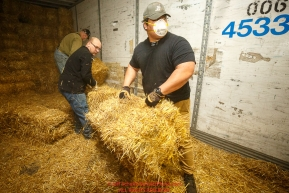 Iditarod volunteers unload a van load of straw as part of the 1635 bales of straw that is destined for all the checkpoints on the 2017 Iditarod at the Airland Transport warehouse facilities in Anchorage Alaska. Thursday February 9, 2017.Photo by Jeff Schultz/SchultzPhoto.com  (C) 2017  ALL RIGHTS RESVERVED