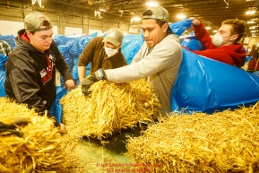Iditarod volunteers for an assembly line to unload, bag, stack and shrinkwrap the 1635 bales of straw that is destined for all the checkpoints on the 2017 Iditarod at the Airland Transport warehouse facilities in Anchorage Alaska. Thursday February 9, 2017.Photo by Jeff Schultz/SchultzPhoto.com  (C) 2017  ALL RIGHTS RESVERVED