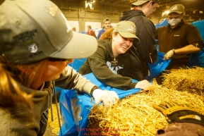 Mormon Church Sister Slaughter and Sister Oliver are a part of an assembly line of Iditarod volunteers which unload, bag, stack and shrinkwrap the 1635 bales of straw that is destined for all the checkpoints on the 2017 Iditarod at the Airland Transport warehouse facilities in Anchorage Alaska. Thursday February 9, 2017.Photo by Jeff Schultz/SchultzPhoto.com  (C) 2017  ALL RIGHTS RESVERVED