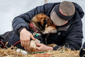 Nathan Schroeder massages one of his dogs shoulders at the Takotna checkpoint during Iditarod 2016.  Alaska.  March 09, 2016.  Photo by Jeff Schultz (C) 2016  ALL RIGHTS RESERVED