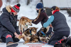 Volunteer vets Glenn Behan (L) and Tonya Stephens examines Kristy Berington dogs shortly after her arrival at the Takotna checkpoint during Iditarod 2016.  Alaska.  March 09, 2016.  Photo by Jeff Schultz (C) 2016  ALL RIGHTS RESERVED
