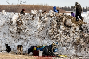 Kids play on a snow berm above Melissa Owens-Stewart's resting team at the McGrath checkpoint during Iditarod 2016.  Alaska.  March 09, 2016.  Photo by Jeff Schultz (C) 2016  ALL RIGHTS RESERVED