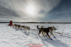 Mitch Seavey on the trail just before the Cripple Checkpoint on Thursday March 10 during Iditarod 2016.  Alaska.    Photo by Jeff Schultz (C) 2016  ALL RIGHTS RESERVED