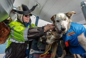 Volunteer pilot Jerry Wortley clips dropped dogs into his plane at the Cripple checkpoint for a flight back to McGrath on Thursday March 10 during Iditarod 2016.  Alaska.    Photo by Jeff Schultz (C) 2016  ALL RIGHTS RESERVED