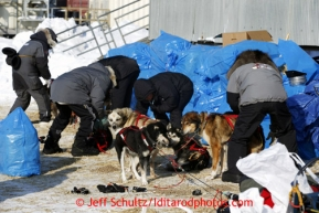 The veterinarian crew does a team effort examine on Mike Williams Jr. dogs shortly after his arrival at the Shaktoolik checkpoint on Monday March 11, 2013.Iditarod Sled Dog Race 2013Photo by Jeff Schultz copyright 2013 DO NOT REPRODUCE WITHOUT PERMISSION