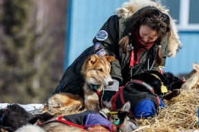 Volunteer vet Justine Lee examines a Kelly Maixner dog at the Ruby checkpoint on Friday March 11th during Iditarod 2016.  Alaska.    Photo by Jeff Schultz (C) 2016  ALL RIGHTS RESERVED