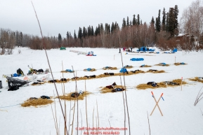 Top teams rest on the slough at the Koyukuk checkpoint during the 2017 Iditarod on Saturday afternoon March 11, 2017.Photo by Jeff Schultz/SchultzPhoto.com  (C) 2017  ALL RIGHTS RESERVED