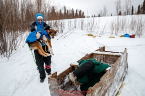 Volunteer Veterinarian Medora Pashmakova carries a Nicolas Petit dropped dog to a waiting sled for a ride to the airport at the Koyukuk checkpoint during the 2017 Iditarod on Saturday afternoon March 11, 2017.Photo by Jeff Schultz/SchultzPhoto.com  (C) 2017  ALL RIGHTS RESERVED