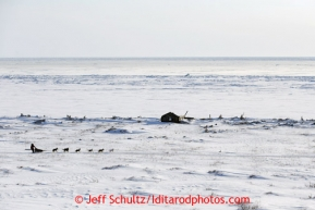 Aily Zirkle along the Bering Sea Tuesday March 12, 2013.Iditarod Sled Dog Race 2013Photo by Jeff Schultz copyright 2013 DO NOT REPRODUCE WITHOUT PERMISSION