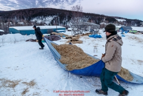 Volunteers move used straw after raking it from a departing dog team at the Ruby Checkpoint on Saturday March 12th during the 2016 Iditarod.  Alaska    Photo by Jeff Schultz (C) 2016  ALL RIGHTS RESERVED