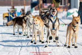 Mats Pettersson lead dog jumps and is ready to continue to run after Mats checked in at the Kaltag checkpoint during the 2017 Iditarod on Sunday afternoon March 12, 2017.Photo by Jeff Schultz/SchultzPhoto.com  (C) 2017  ALL RIGHTS RESERVED