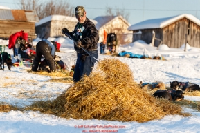 Volunteer checker and trail crew Mark Greene rakes used straw after a team left the Kaltag checkpoint during the 2017 Iditarod on Sunday evening  March 12, 2017.Photo by Jeff Schultz/SchultzPhoto.com  (C) 2017  ALL RIGHTS RESERVED