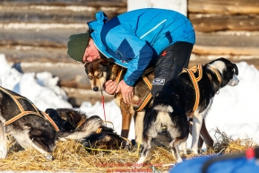 Lars Monsen massages one of his dogs shoulders at the Kaltag checkpoint during the 2017 Iditarod on Sunday evening  March 12, 2017.Photo by Jeff Schultz/SchultzPhoto.com  (C) 2017  ALL RIGHTS RESERVED