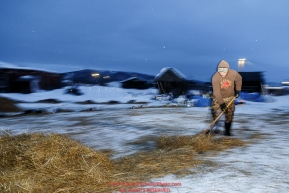 Race Judge Kevin Saiki rakes straw after a team left the dog lot in the early morning at the Kaltag checkpoint on Sunday March 13th during the 2016 Iditarod.  Alaska    Photo by Jeff Schultz (C) 2016  ALL RIGHTS RESERVED