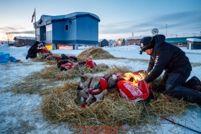 Laura Neese massages her dogs at the Kaltag checkpoint during the 2017 Iditarod on Monday morning March 12, 2017.Photo by Jeff Schultz/SchultzPhoto.com  (C) 2017  ALL RIGHTS RESERVED