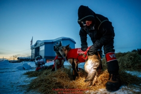 Volunteer vet James Kenyon examines a Laura Neese dog shortly after she arrived at the Kaltag checkpoint during the 2017 Iditarod on Monday morning March 12, 2017.Photo by Jeff Schultz/SchultzPhoto.com  (C) 2017  ALL RIGHTS RESERVED