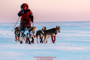 Aliy Zirkle runs on the sea ice of Norton Sound a few miles before the Koyuk checkpoint during the 2017 Iditarod on Monday evening at sunset  March 12, 2017.Photo by Jeff Schultz/SchultzPhoto.com  (C) 2017  ALL RIGHTS RESERVED
