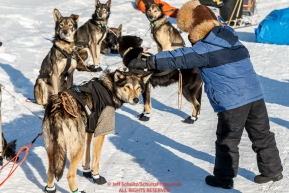 A young Elim student pets Pete Kaiser dogs at the Elim checkpoint on Monday March 14th during the 2016 Iditarod.  Alaska    Photo by Jeff Schultz (C) 2016  ALL RIGHTS RESERVED