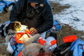 Ralph Johannessen boots his dogs just prior to leaving the Koyuk checkpoint on Monday March 14th during the 2016 Iditarod.  Alaska    Photo by Jeff Schultz (C) 2016  ALL RIGHTS RESERVED
