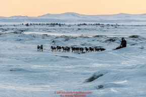 Jessie Royer runs over sea ice at dawn as she approaches the Koyuk checkpoint on Monday March 14th during the 2016 Iditarod.  Alaska    Photo by Jeff Schultz (C) 2016  ALL RIGHTS RESERVED