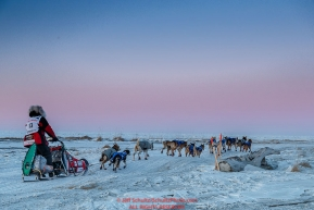 Aliy Zirkle runs on the trail toward the Bering Sea just a few miles before the finish  in Nome for a third place finish on Tuesday March 15th during the 2016 Iditarod.  Alaska    Photo by Jeff Schultz (C) 2016  ALL RIGHTS RESERVED