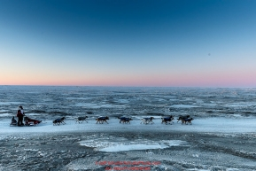 Aliy Zirkle runs on the trail along the shore of the Bering Sea just a few miles before the finish  in Nome for a third place finish on Tuesday March 15th during the 2016 Iditarod.  Alaska    Photo by Jeff Schultz (C) 2016  ALL RIGHTS RESERVED