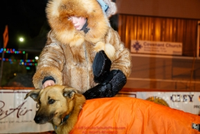 Wrapped in a fur parka, 9 year old Christopher Eule pets a Martin Buser dog after Martin arrived at the finish line in Nome in 32nd place during the 2017 Iditarod on Thursday March 16, 2017.Photo by Jeff Schultz/SchultzPhoto.com  (C) 2017  ALL RIGHTS RESERVED
