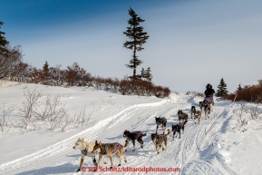 Jessie Royer drops onto the Fish River in the afternoon on her way into the White Mountain checkpoint on Tuesday March 16, 2015 during Iditarod 2015.  (C) Jeff Schultz/SchultzPhoto.com - ALL RIGHTS RESERVED DUPLICATION  PROHIBITED  WITHOUT  PERMISSION
