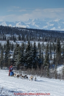 Joan Klejka and team run down the trail on the Denali Highway with the Alaska Range in the background during the start day of the 2015 Junior Iditarod on Sunday March 1, 2015(C) Jeff Schultz/SchultzPhoto.com - ALL RIGHTS RESERVED DUPLICATION  PROHIBITED  WITHOUT  PERMISSION