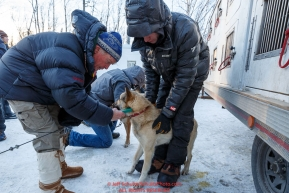Volunteer Veterinarian Mike Lindeen uses a chip-checker to confirm the identity of a Justin Stielstra dog at the pre-race vet-check for dogs running this year's 2017 Iditarod at Iditarod Headquarters in Wasilla, Alaska.  Wednesday March 1, 2017Photo by Jeff Schultz/SchultzPhoto.com  (C) 2017  ALL RIGHTS RESVERVED