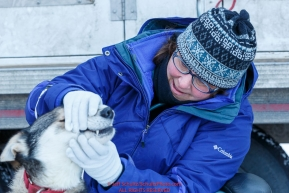 Volunteer Veterinarian Amy Richardson examines the teeth of Enzo, a Laura Neese dog at the pre-race vet-check for dogs running this year's 2017 Iditarod at Iditarod Headquarters in Wasilla, Alaska.  Wednesday March 1, 2017Photo by Jeff Schultz/SchultzPhoto.com  (C) 2017  ALL RIGHTS RESVERVED