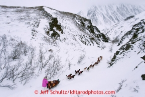 Deedee Jonrowe runs through a narrow section of trail shortly after cresting the summit of Rainy Pass during the 2013 Iditarod sled Dog Race   March 4, 2013.  Photo by Jeff Schultz Do Not Reproduce without permission