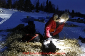 Monday March 5, 2012  Veterinarian Elizabeth King checking Aaron Burmeister's dogs at the Finger Lake checkpoint during Iditarod 2012.