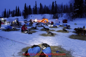 Monday March 5, 2012  Dogs resting in the early morning at Finger Lake checkpoint during Iditarod 2012.