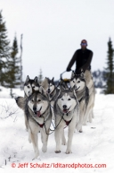 Mike Ellis and his Siberian Husky team run down the trail into the halfway checkpoint of Iditarod on Friday March 8, 2013.Iditarod Sled Dog Race 2013Photo by Jeff Schultz copyright 2013 DO NOT REPRODUCE WITHOUT PERMISSION