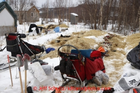 Teams rest in spots vacated by previous mushers, hence the used straw on either side of the parking spots at the halfway checkpoint of Iditarod on Friday March 8, 2013.Iditarod Sled Dog Race 2013Photo by Jeff Schultz copyright 2013 DO NOT REPRODUCE WITHOUT PERMISSION
