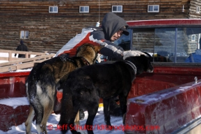 Local Dion Benjamin holds on to two dropped dogs at the Shageluk checkpoint on Saturday March 9, 2013.Iditarod Sled Dog Race 2013Photo by Jeff Schultz copyright 2013 DO NOT REPRODUCE WITHOUT PERMISSION