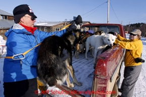 Veterinarian Vern Otte loads dropped dogs into the back of a pickup truck bound for the airport in Shageluk on Saturday March 9, 2013.Iditarod Sled Dog Race 2013Photo by Jeff Schultz copyright 2013 DO NOT REPRODUCE WITHOUT PERMISSION
