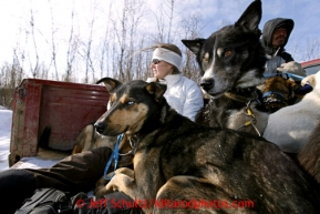 Veterinarian Julie Kittams holds onto dropped dogs in the back of a pickup truck as it heads to the Shageluk airport Saturday March 9, 2013.Iditarod Sled Dog Race 2013Photo by Jeff Schultz copyright 2013 DO NOT REPRODUCE WITHOUT PERMISSION
