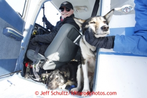 Volunteer Iditarod pilot Jerry Wortley with a load of dropped dogs at the Shageluk checkpoint on Saturday March 9, 2013.  Iditarod Sled Dog Race 2013  Photo by Jeff Schultz copyright 2013 DO NOT REPRODUCE WITHOUT PERMISSION