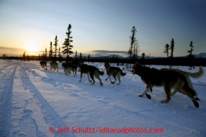 Aily Zirkle drives her dogs into the setting sun a couple miles after leaving the Kaltag checkpoint on Saturday March 9, 2013.Iditarod Sled Dog Race 2013Photo by Jeff Schultz copyright 2013 DO NOT REPRODUCE WITHOUT PERMISSION