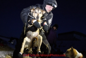 Tuesday March 13, 2012   Leader Dallas Seavey moves a dog in position just befor leaving White Mountain. Iditarod 2012.
