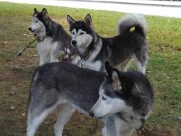 Jjay's Dogs