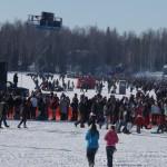 2014 Iditarod Restart