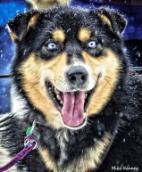 snow-dog-race-start-2011