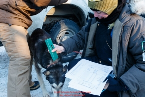 Volunteer veterinarian Kimberly McCreedy scans a Kristy Berington dog for its neck-implanted chip to determine who it is during the pre-race vet check at Iditarod Headquarters in Wasilla, Alaska. Wednesday February 26, 2019 Photo by Jeff Schultz/  (C) 2019  ALL RIGHTS RESERVED