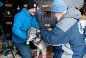 Musher Jason Campeau helps veterinarian Bill Sampson examine
