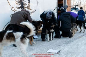Veterinarians check Jeff Deeter's dogs during the pre-race vet check at Iditarod Headquarters in Wasilla, Alaska. Wednesday February 26, 2019 Photo by Jeff Schultz/  (C) 2019  ALL RIGHTS RESERVED