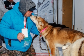 P-Team volunteer Dave Mathis works on getting a urine sample from a dog just priort to the ceremonial start of the 2018 Iditarod in Anchorage, Alaska on Saturday, March 1 2018.Photo by Jeff Schultz/SchultzPhoto.com  (C) 2018  ALL RIGHTS RESERVED